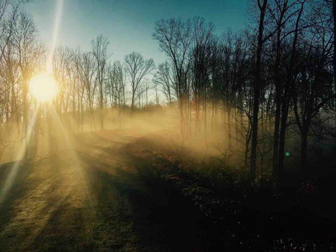 1_Olivette_Sunrise