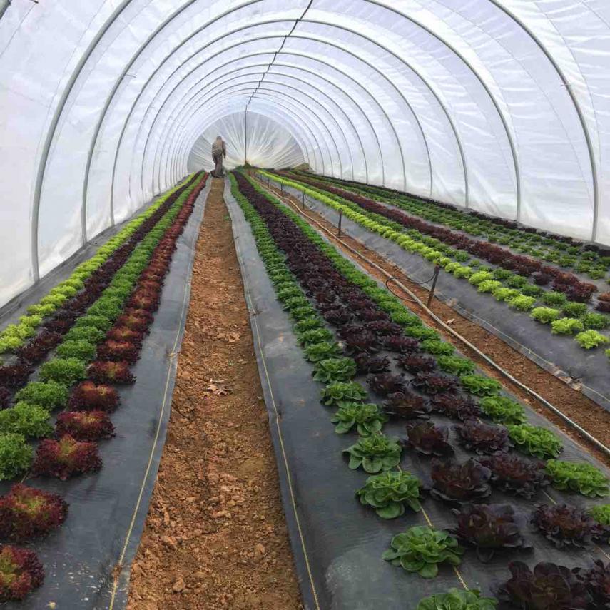 3_Olivette-4-Season-Farm