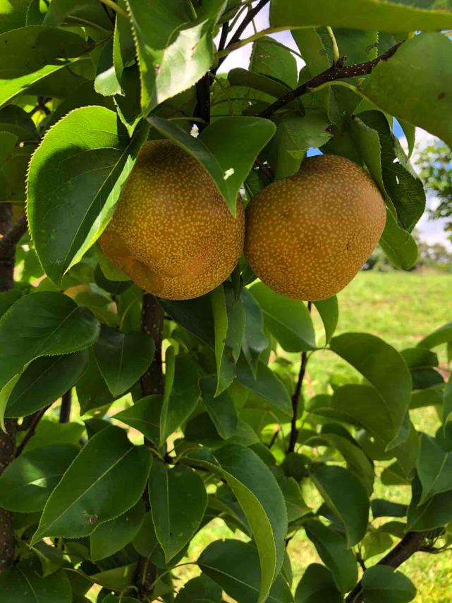 4_Olivette_Community-Orchard